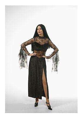 Spider Cobweb Queen Ex Hire Halloween Fancy Dress Costume Size 6 - 8 P9448 (Hire Halloween Costumes)