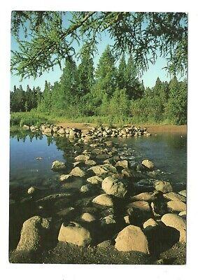 Mississippi Headwaters Itasca State Park Minnesota Vintage 4x6 Postcard SL32