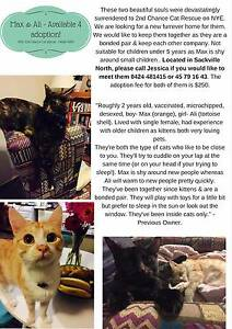 Lovely bonded pair of 2 year old cats for adoption - Max & Ali <3 Sackville North The Hills District Preview