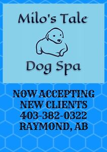 Pet Grooming- call to book