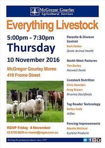 Everything Livestock - McGregor Gourlay Moree Moree Plains Preview