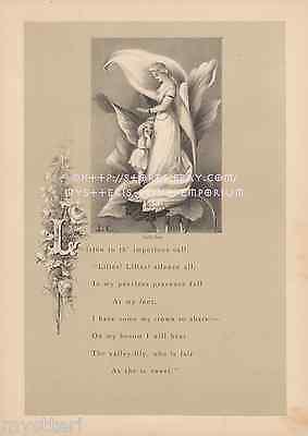 Calla Lily Garden Art - Calla Lily-Flower-Fairy Queen-Garden-Victorian-1877 ANTIQUE VINTAGE ART PRINT