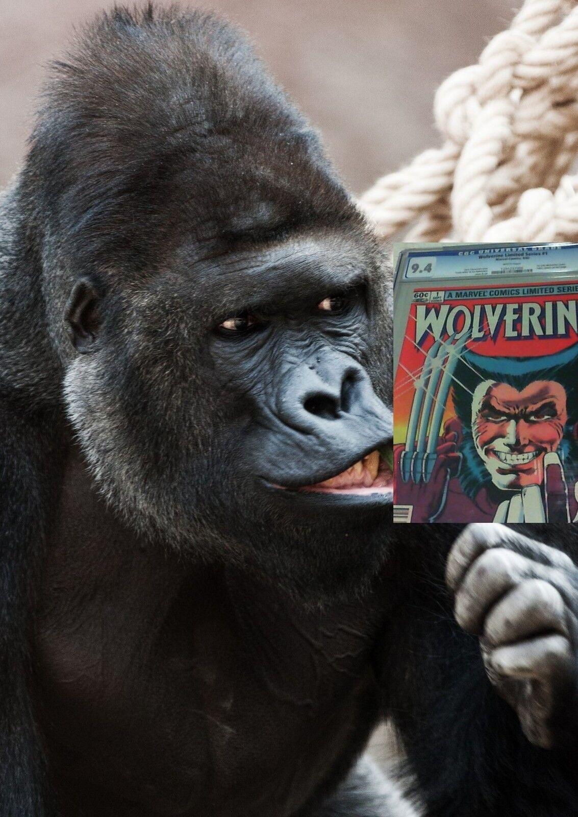 Mad-Monkey Comix