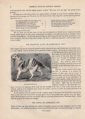 Mackenzie River Hund Husky HOLZLSTICH von 1866 Hare Indian Dog