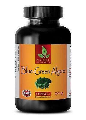 BLUE GREEN ALGAE 500mg - Klamath Algae - Best Antioxidant - 1 Bottle 60 (Best Blue Green Algae)