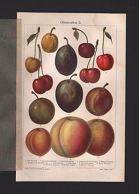 Chromo-Lithografien 1908: Obstsorten II. Gelbe Mirabelle Glaskirsche Obst