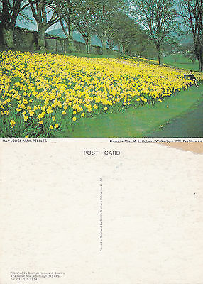 1980's HAY LODGE PARK PEEBLES SCOTLAND UNUSED COLOUR POSTCARD
