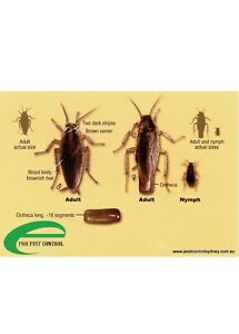 GUARANTEED PEST CONTROL SERVICES 416-834-3789