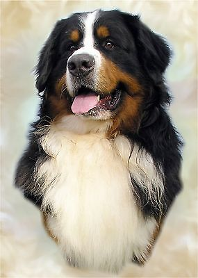 Bernese Mountain Dog A4 Photo Image Picture Print by paws2print