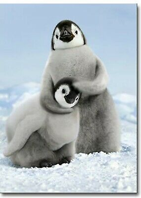 Penguin Noogie Funny Birthday Card - Greeting Card by Avanti