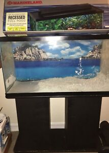 URGENT - 38 Gallon Setup