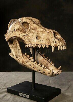 "Dire Wolf Skull Fossil Museum Replica 12+"" Resin | Game of Thrones Stark Family"