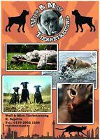 Hundebetreuung,Hundesitter,Dogwalker,Gassiservice,Katzenbetreuung Berlin - Prenzlauer Berg Vorschau