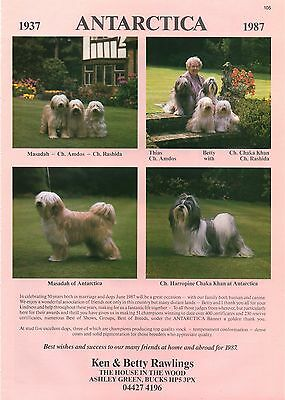 ANTARCTICA TIBETAN TERRIER OUR DOGS 1987 DOG BREED KENNEL ADVERT PRINT PAGE
