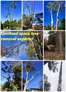 Best Value Tree Care in Melbourne!