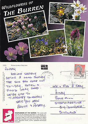 1990's WILDFLOWERS OF THE BURREN COUNTY CLARE IRELAND COLOUR POSTCARD