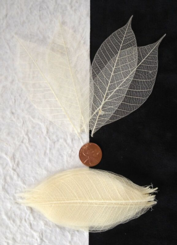 25 Skeleton Leaves Bleached White medium rubber leaf Natural Soap Wedding cards