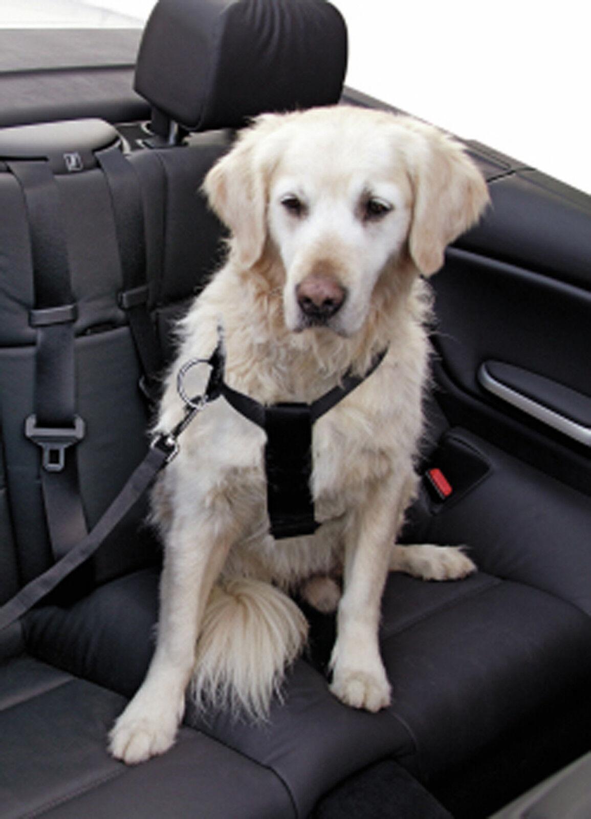 hunde auto sicherheitsgeschirr test vergleich hunde. Black Bedroom Furniture Sets. Home Design Ideas