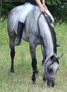 LACEY: SWEET, PLACID, GORGEOUS GREY DRESSAGE /CONFIDENCE BOOSTER Beaudesert Ipswich South Preview