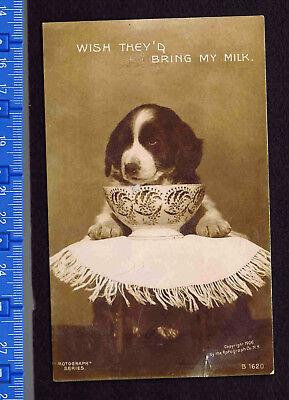 1909 ROTOGRAPGH Dog at Milk Bowl  REAL PHOTO RPPC Postcard Hand-Tinted