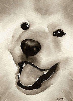 SAMOYED Dog Watercolor ART PRINT Signed by Artist DJR