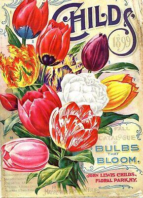 US SELLER, flower bulbs plants bloom 1899 poster abstract art prints