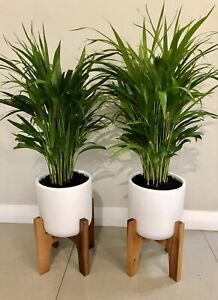 Indoor plants potted. $60 each firm