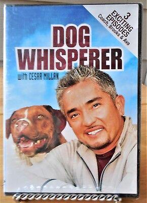 "Screen Media DVD ""Dog Whisperer"" 3 Exciting Episodes(Coach,Brooks & AVA) New"
