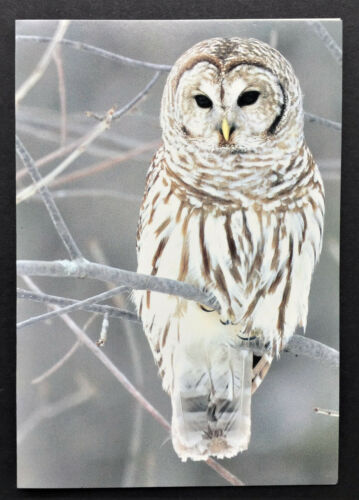 Barred Owl Note Card SET 4 SMALL Photograph Christmas Winter Holiday Wildlife
