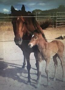 GIVEAWAY THOROUGHBRED BROODMARE Woodstock Townsville Surrounds Preview