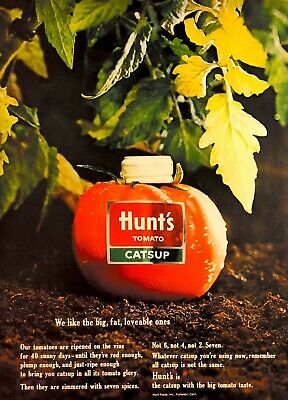 1963 Hunts Catsup Vintage Print Ad Tomato Ripened On The Vine
