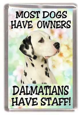 """Dalmatian Dog Fridge Magnet """"Most Dogs Have Owners Dalmatians Have Staff"""""""