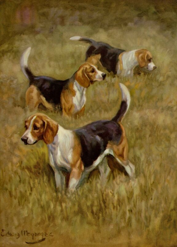 Antique BEAGLE Dog Print 1950s Edwin Megargee Beagle Dog Art 2638