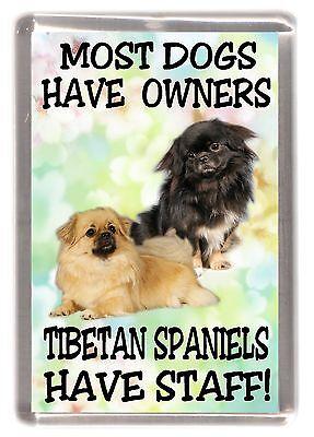 "Tibetan Spaniel Dog Fridge Magnet ""... Tibetan Spaniels Have Staff!"" - Starprint"