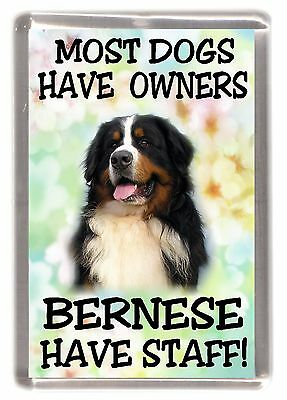 """Bernese Mountain Dog Fridge Magnet """"Most Dogs Have Owners Bernese Have Staff"""""""