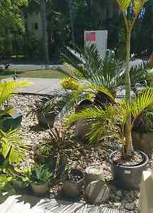 Plant/ Pot sale Trinity Beach Cairns City Preview
