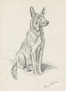 GERMAN-SHEPHERD-ALSATIAN-SEATED-1930S-DOG-ART-SKETCH-PRINT-by-MAC-LUCY-DAWSON