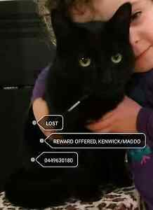 LOST black male cat. 1 yo REWARD OFFERED Maddington Gosnells Area Preview