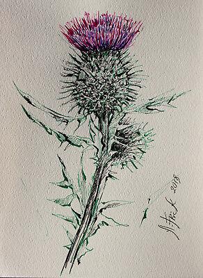 """feine Zeichnung Pflanzenstudie farbige Tusche Original """"Mariendistel"""" Blume"""