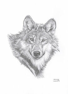 WOLF-Limited-Edition-art-drawing-prints-available-2-sizes-A4-A3-greetings-Card