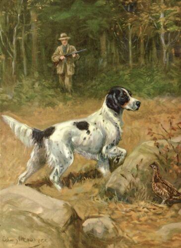 1950s Antique ENGLISH SETTER Dog Print Gallery Wall Art Megargee Dog Art 3959d