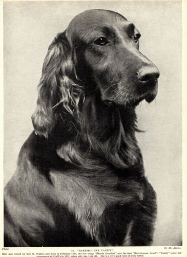 1930s Antique IRISH SETTER Dog Print Champion Hartsbourne Vanity 3267-U