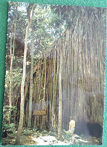 Early Postcard Atherton Tablelands N.Qld.Curtain Fig Tree- Murray Views