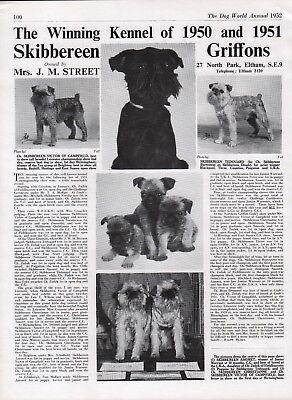 BRUSSELS GRIFFON DOG WORLD BREED KENNEL ADVERT PRINT PAGE SKIBBEREEN KENNEL 1952