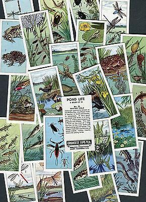 """BISHOPS STORTFORD 1966 SET OF 25 """"POND LIFE"""" TEA CARDS"""