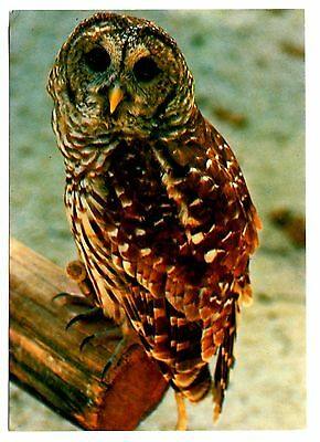 Florida Barred Owl Postcard Homosassa Springs Nature World Rehabilitataion Birds