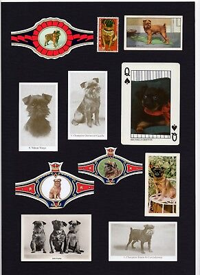 BRUSSELS GRIFFON  MOUNTED SET VINTAGE DOG COLLECTABLE CARDS STAMPS AND BANDS
