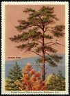 United States Trees Postal Stamps