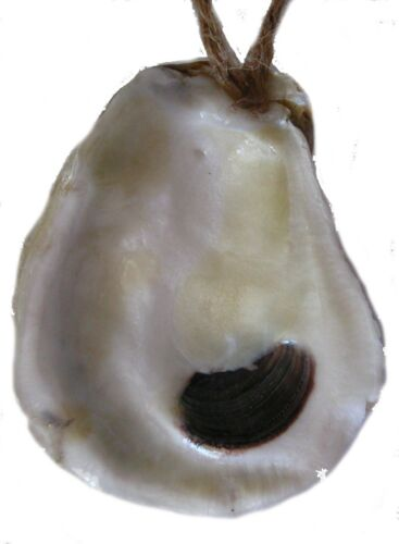 Oyster shell ornament New Orlea Louisiana beach gift party favor Christmas