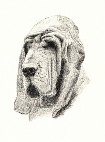 1935 Antique BLOODHOUND Dog Print Gallery Wall Art C Francis Wardel Art CFW 3607